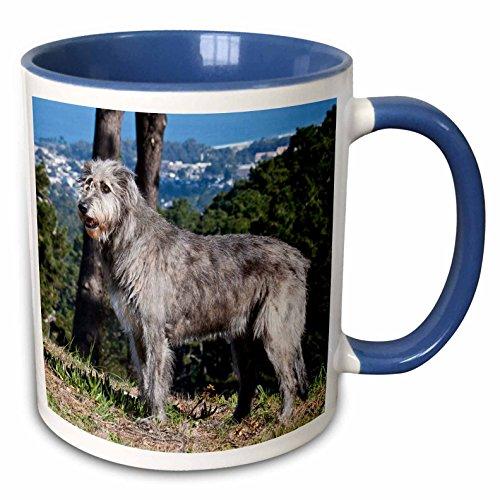 3dRose Danita Delimont - Dogs - An Irish Wolfhound dog with pine trees - NA02 ZMU0128 - Zandria Muench Beraldo - 15oz Two-Tone Blue Mug ()