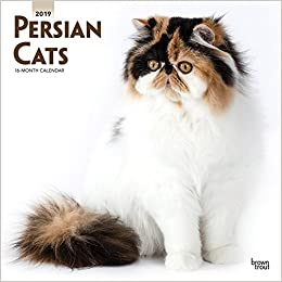 Persian Cats 2019 12 x 12 Inch Monthly Square Wall Calendar