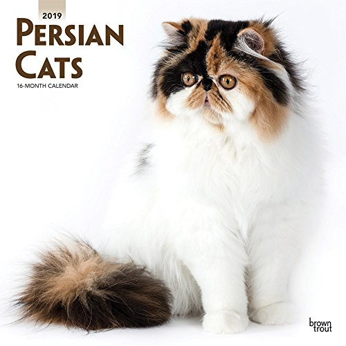 Persian Cats 2019 12 x 12 Inch Monthly Square Wall Calendar, Animals Cats (Multilingual Edition) ()