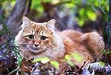 FHYGJD Green Eyes Orange Cat Art Print Canvas Poster,Home Wall Decor(24x36 inch)