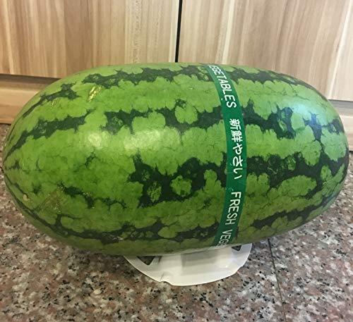 Home & Garden Homarden Melon And Squash Cradles Set Of 12