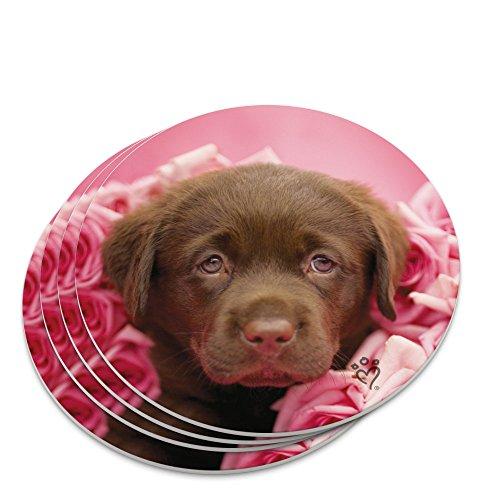Chocolate Labrador Retriever Puppy Dog Pink Roses Novelty Coaster ()