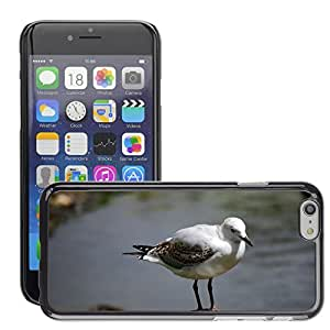 Hot Style Cell Phone PC Hard Case Cover // M00116463 Seagull Rock Bird Wildlife Gull // Apple iPhone 6 4.7""
