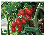 buy David's Garden Seeds Tomato Grape Red Pearl QX6671 (Red) 25 Non-GMO, Organic Seeds now, new 2019-2018 bestseller, review and Photo, best price $12.95