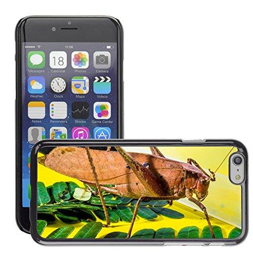 "Bild Hart Handy Schwarz Schutz Case Cover Schale Etui // M00135564 Grasshopper Viridissima Insect Scare // Apple iPhone 6 PLUS 5.5"""