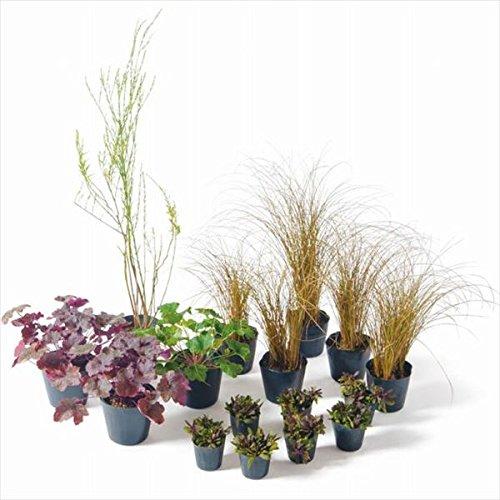 オンリーワン 目的で選ぶ 植栽セット シック 下草 ゴンフォスティグマ カッコいい景色 YE6-SET01 B01D1LV8LO