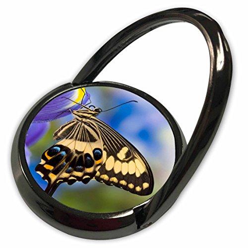 Emperor Iris - 3dRose Danita Delimont - Butterflies - Tropical Butterfly, Emperor Swallowtail - US48 DGU0447 - Darrell Gulin - Phone Ring (phr_95476_1)