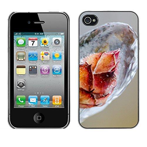 Premio Sottile Slim Cassa Custodia Case Cover Shell // F00019309 plant Frozen // Apple iPhone 4 4S 4G