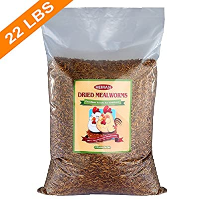 22 LBS Dried Mealworms Bulk for Birds, Chicken Treats and Other Poultry food etc (2 bags of 11 LBS)