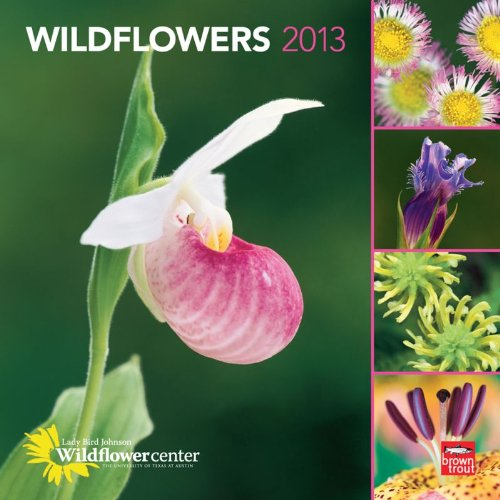 Wildflowers 2013 Square 12X12 Wall Calendar