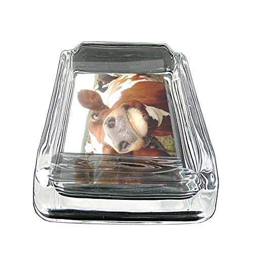 Funny Animal Faces S11 Glass Square Ashtray 4''x3'' Sturdy Cigarette Smoking Bar by JS & Caren