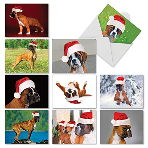 Holiday Best Boxers - 10 Assorted Dog Merry Christmas Cards with Envelopes (4 x 5.12 Inch) - Cute Animals, Adorable Pet Dogs in Santa Hats - Boxed Xmas Greetings for Kids, Adult AM6295XSG-B1x10
