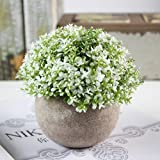 RONSHIN Simulate Potted Plant Pretty Microlandschaft Home Office Hotel Decor (baby tears - white)