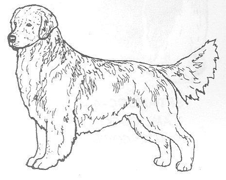 Dog Rubber Stamps - Golden Retriever-1E Size: 2-1/4