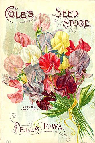 - WholesaleSarong Weet peas Cole's Garden Annual 1893 Poster Cool Wall Art Bedroom bar Club Shop