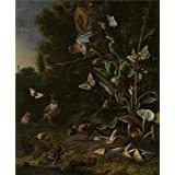 high quality polyster Canvas ,the Reproductions Art Decorative Canvas Prints of oil painting 'Melchior d'Hondecoeter Birds Butterflies and a Frog among Plants and Fungi ', 30 x 36 inch / 76 x 92 cm is best for Gym decor and Home decoration and Gifts