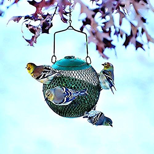 Metal Mini Bird Feeder (Hanging Bird Feeder Seed Metal Wild Pet Outdoor Garden Squirrel Proof Green 6