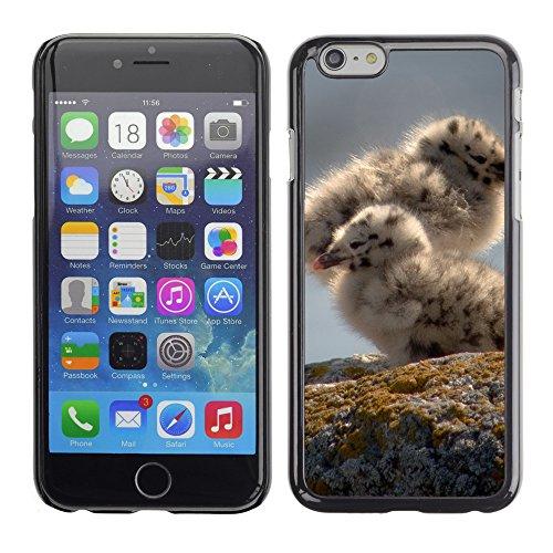 "Premio Sottile Slim Cassa Custodia Case Cover Shell // V00003803 poussins mouettes // Apple iPhone 6 6S 6G 4.7"""