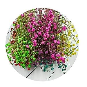 Sevem-D 5G / Batch Breath Dried Flowers Home Decor Flowers Dried Flowers Sky Nature Star 53