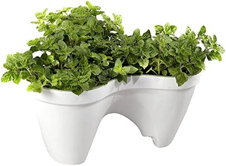 Keter - Macetero triple aplilable Ivy, Color Blanco