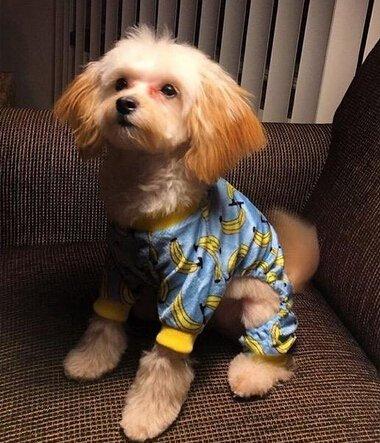 CuteBone Dog Pajamas Banana Dog Apparel Dog Jumpsuit Pet Clothes Pajamas P06(L) by CuteBone (Image #5)