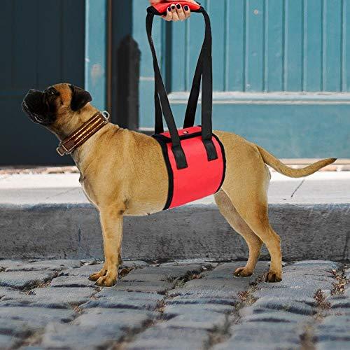 Cinturón auxiliar para perros Arnés para perros Soporte del arnés ...