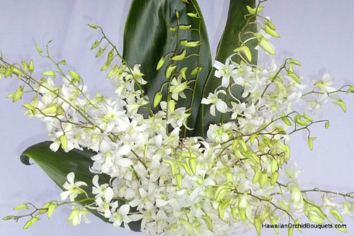 (Enchanting Orchids)