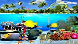 Great Barrier Reefs [Download]