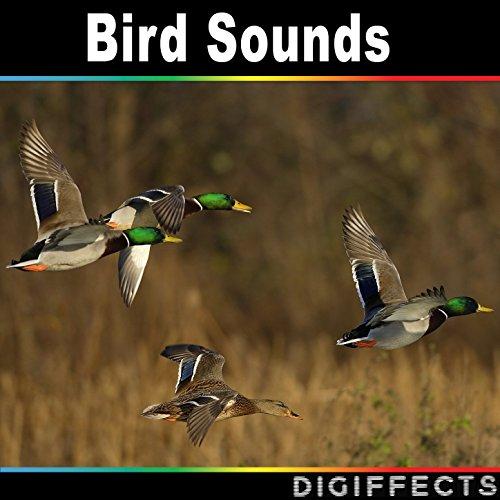 Instant quack - Sound Button | Myinstants