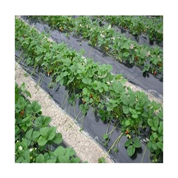 Piantagione di piante per il controllo delle erbacce - Barriera erbaccia per copertura suolo - Ecologica per il… 5 spesavip