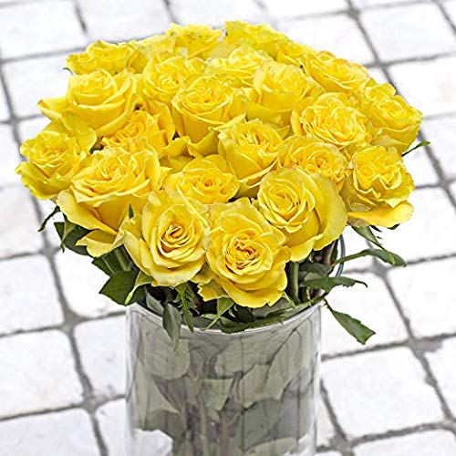 Green Choice Flowers - 36 (3 Dozen) Premium Yellow Fresh Roses with 20 inch Long Stem Farm Fresh Flowers Beautiful Yellow Rose Flower Cut Per Order Direct from Farm Fast Free Delivery Long Lasting