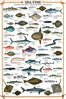 HUGE LAMINATED ENCAPSULATED Sea Fish POSTER Measures Approx 36x24 Inches 915x61cm