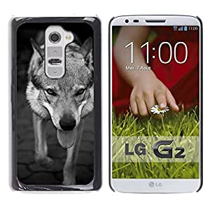 Hot Style Cell Phone PC Hard Case Cover // M00131023 Dog Wolf Pet Big Animal Scary Cat // LG G2 D800 D802 D802TA D803 VS980 LS980