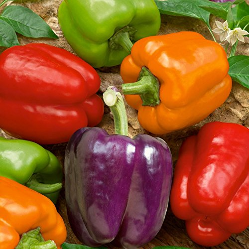 Organic Rainbow Mix Pepper Seeds Each color has its own flavor
