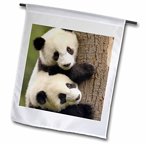 3dRose fl_70216_1 Giant Panda Bears, Wolong China Conservation, China AS07 POX0412 Pete Oxford Garden Flag, 12 by -
