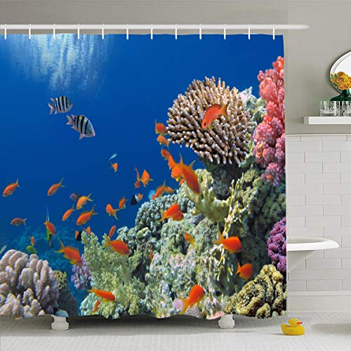 (Ahawoso Shower Curtain 66x72 Inches Aquatic Barrier Tropical Fish On Coral Reef Egypt Red Nature Great Australia Andaman Aqua Aquarium Scate Waterproof Polyester Fabric Set with Hooks)