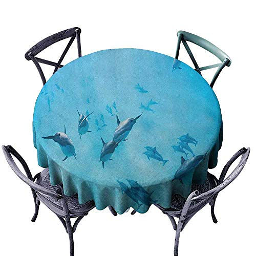 G Idle Sky Hawaiian Fitted Tablecloth Group of Dolphins in Hawaii Wildlife Underwater Animals Tropical Aquatic Nature Picture Great for Buffet Table D39 Blue