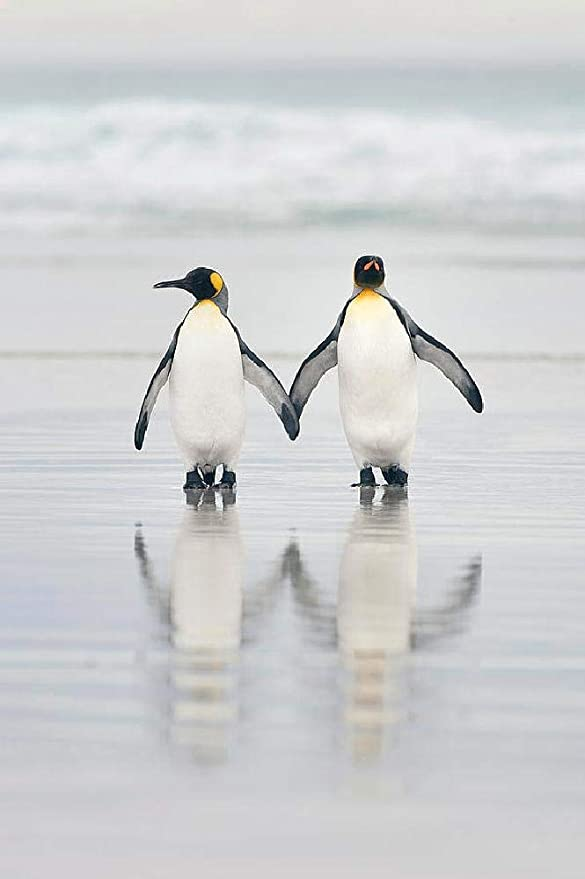 1000 Pieces Wooden Adult Puzzle Penguin