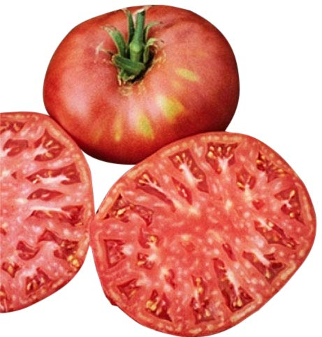 Organic Pink Ponderosa Heirloom Tomato Seeds - Large Tomato - One of The Most Delicious Tomatoes for Home Growing, Non GMO - Neonicotinoid-Free.