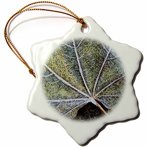 3dRose ORN_189794_1 USA, Washington, John a Finch Arboretum, Sycamore Leaves Snowflake Ornament, Porcelain, 3-Inch ()