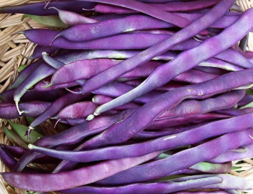 Pole Beans Seed Pack - 1/4 oz pack Louisiana Purple Pod Pole Bean Seeds RL