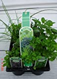 6 Pack of 9cm Mixed Herbs Plants, Parsley Sage, Rosemary, Thyme, Oregano and Mint- 6 Varieties Per Pack