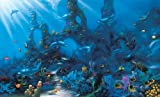(99x164) Dolphin Paradise Huge Wall Mural Art