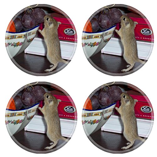 MSD Round Coasters Gerbil Greedy Fruit Mouse Natural Rubber Material Image 738041