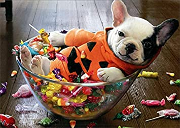 Amazon.com : Avanti Puppy in Halloween Candy Bowl Funny/Humorous Halloween  Card : Office Products