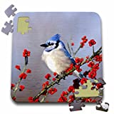 Danita Delimont - Jay - Blue Jay in icy Green Hawthorn tree, Marion County, Illinois. - 10x10 Inch Puzzle (pzl_250997_2)