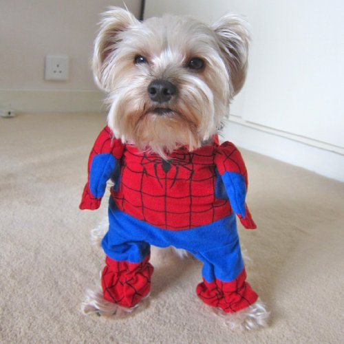 [Alfie Pet by Petoga Couture - Superhero Costume Spiderman - Size: L] (Pet Spiderman Costumes)