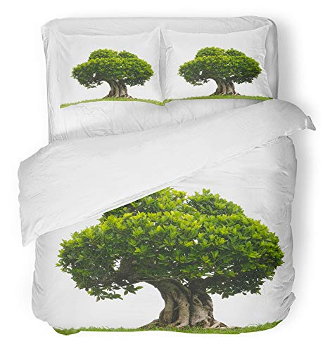 Elm Chinese Tree Bonsai (Emvency 3 Piece Duvet Cover Set Breathable Brushed Microfiber Fabric Green Trunk Bonsai Tree in Garden White Old Leaf Shape Color Roots Asian Mini Bedding Set with 2 Pillow Covers Full/Queen Size)