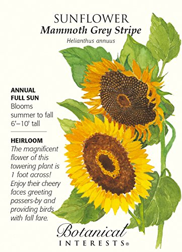 Mammoth Grey Stripe Sunflower Seeds - 8 grams - Annual -