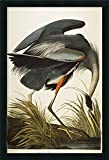 Canvas Art Framed 'Great Blue Heron (Ardea Herodias) plate CCXI from 'The Birds of America'' by John James Audubon